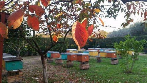 un parco con una panchina e degli alberi