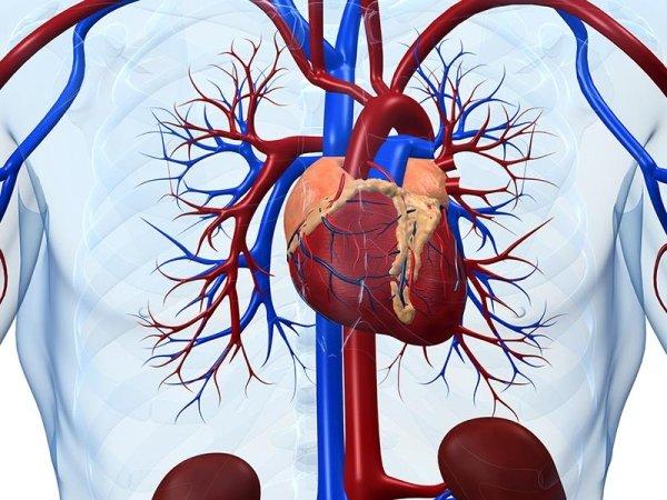 esami cardiologici