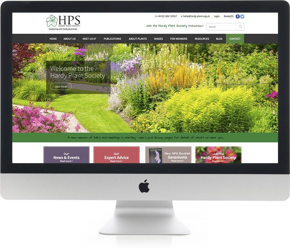 Website design on iMac
