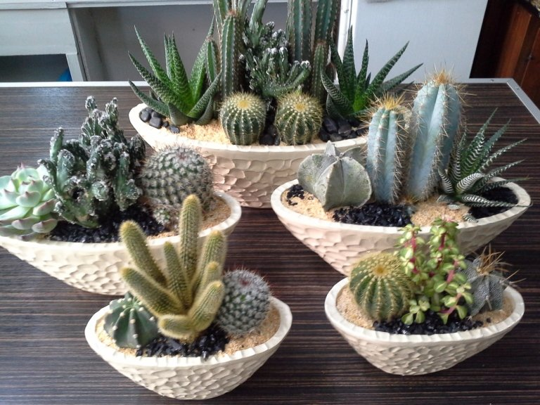 piante ornamentali e grasse