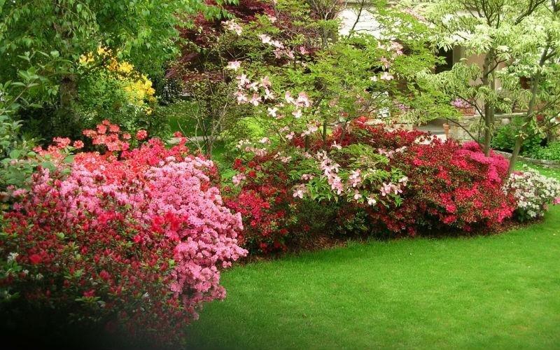 Lavori di giardinaggio piante