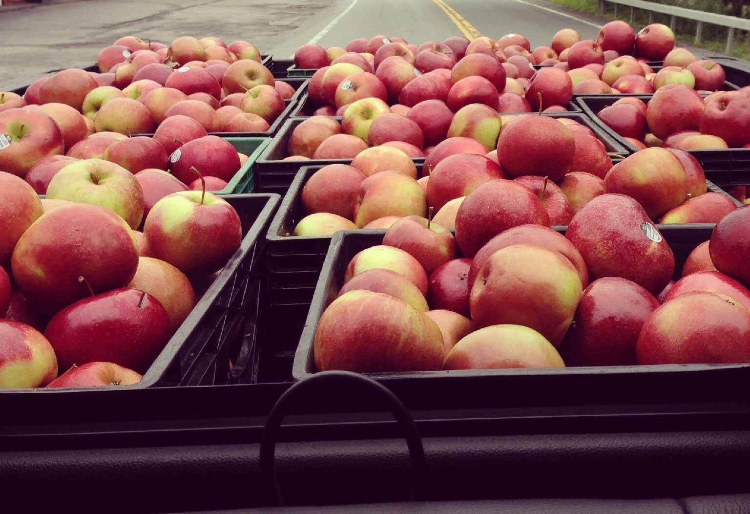 Delicious Apples NJ