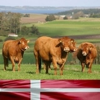 Carne Danese
