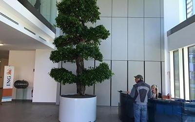 installazione pianta