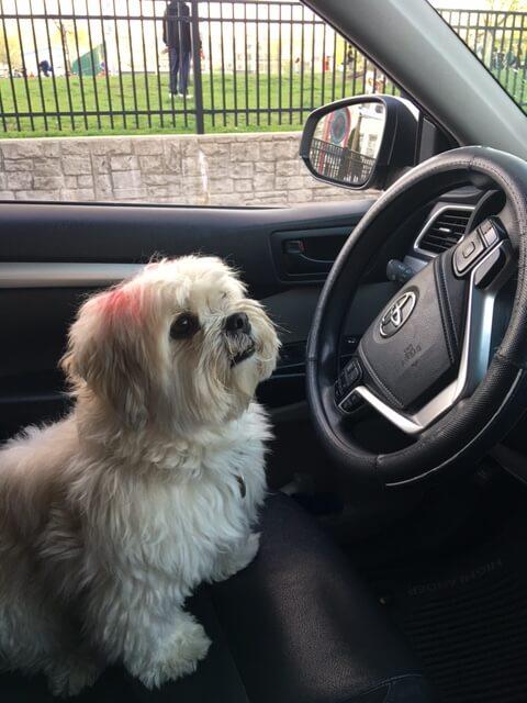 hoboken pet friendly car service