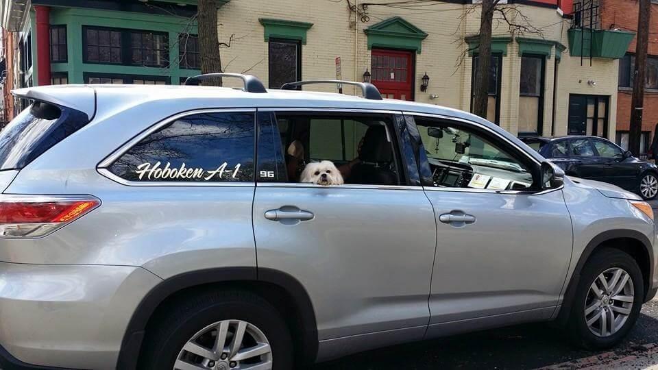 dog friendly car service