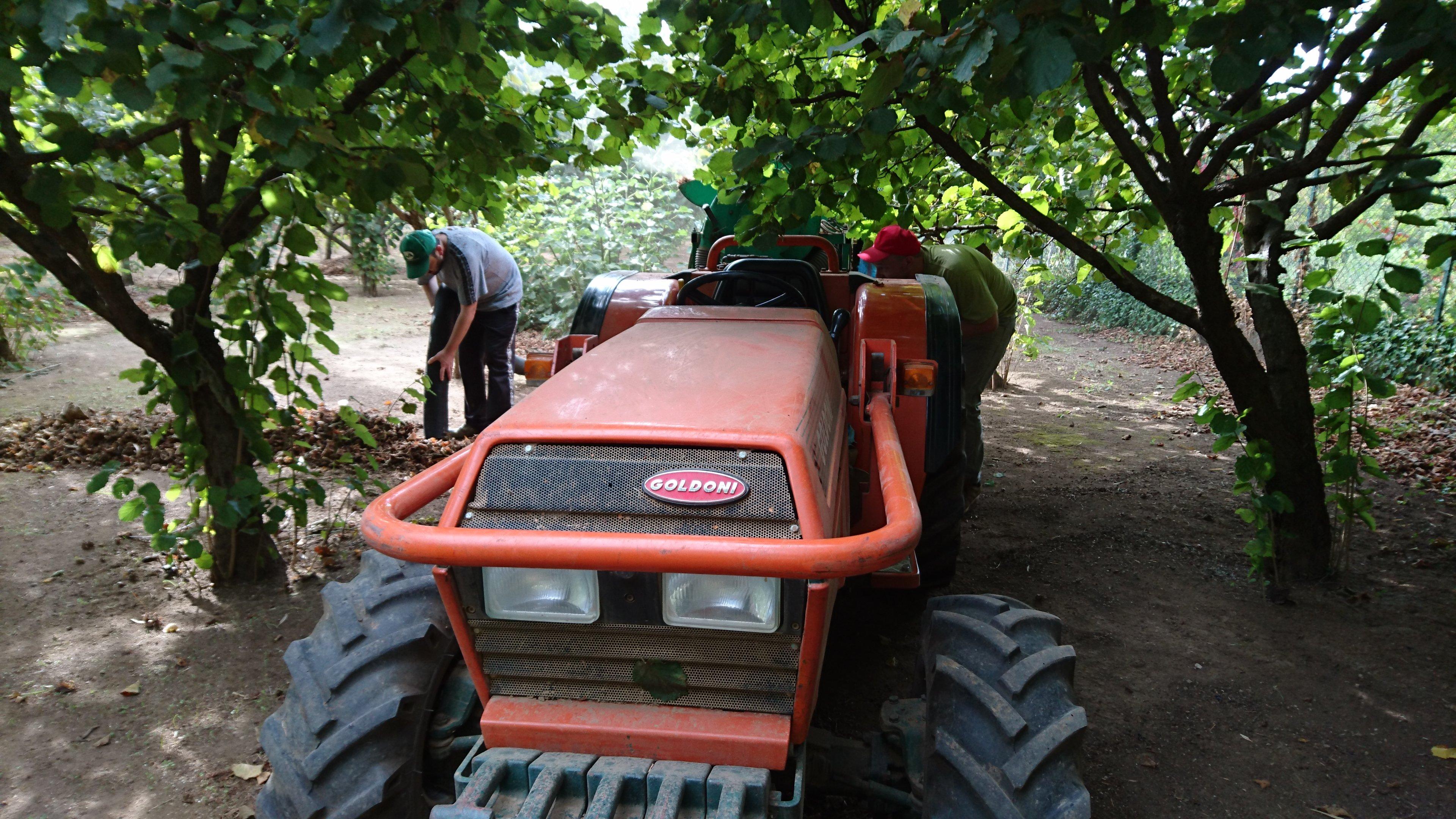 trattore nel campo di nocciole