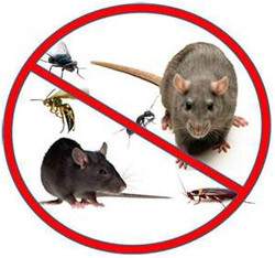commercial pest control Odessa, TX