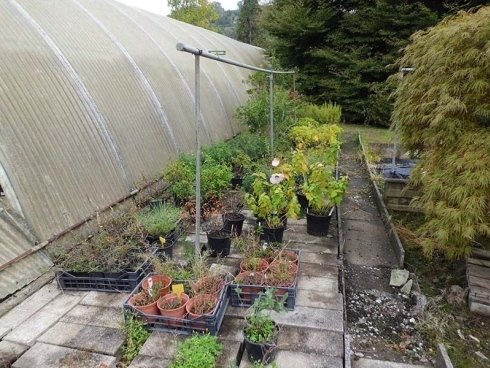 piante e piantine