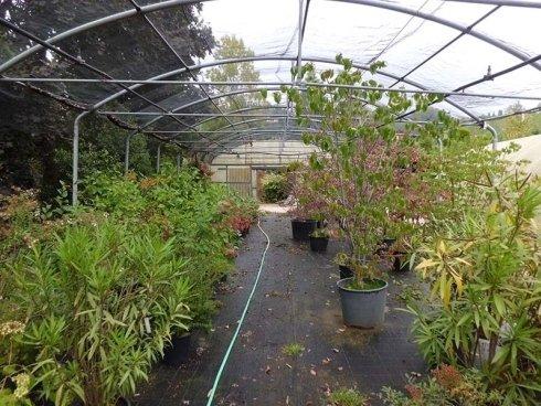 piante da serra