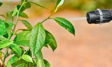 trattamenti piante e fiori