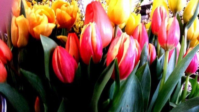 fiori di stagione
