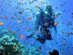 Diving industry