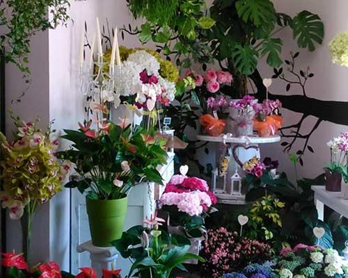 dei vasi di fiori