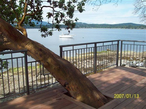 Painted rails custom built around a large tree growing out of the side of a wooden deck overlooking a small lake