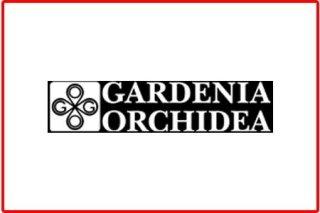 GARDENIA ORCHIDEA da Marino srl Abbiategrasso