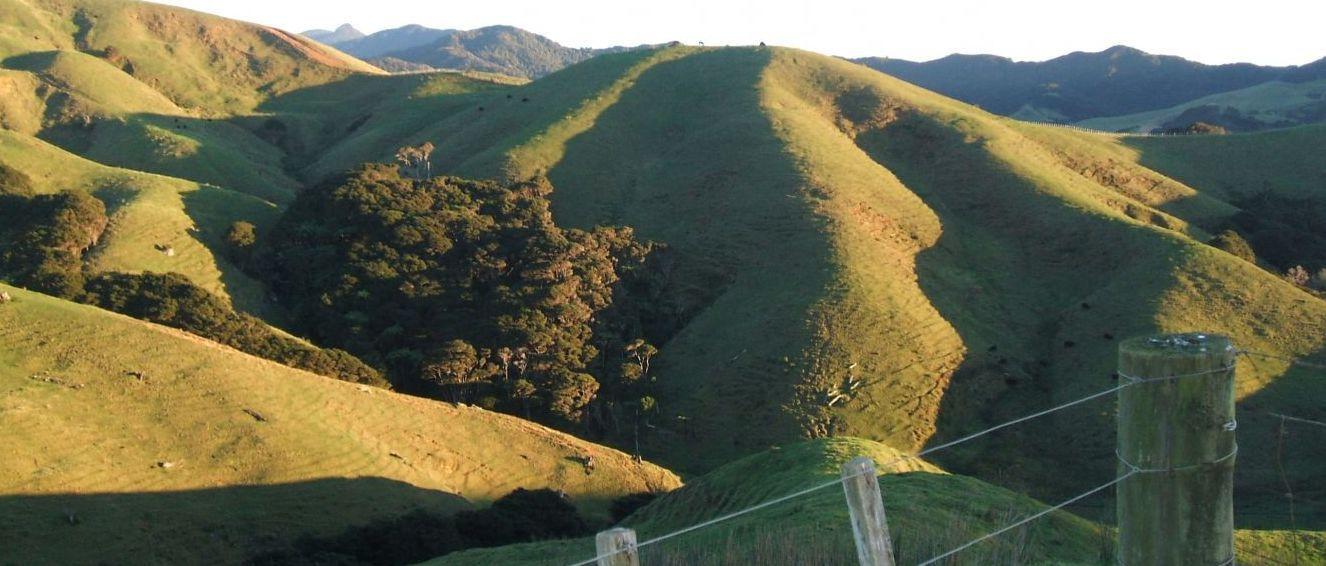 Landscape in NZ