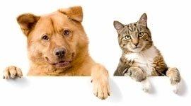 Operazioni cani e gatti