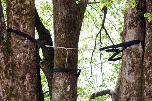Tree Service Norwalk, CT
