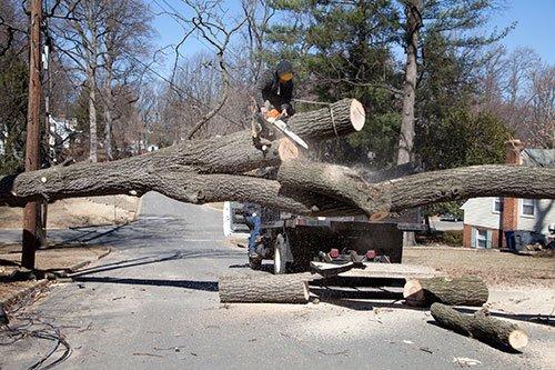 Tree Service Greenwich, CT