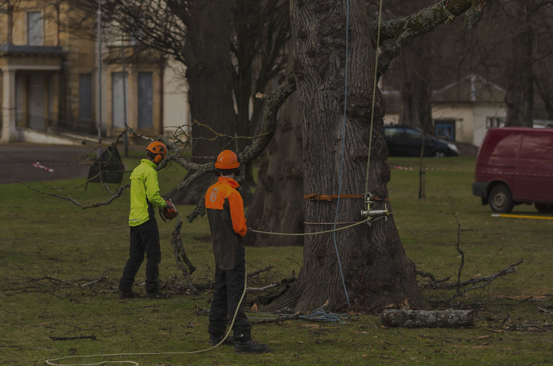 Tree Service Stamford, CT