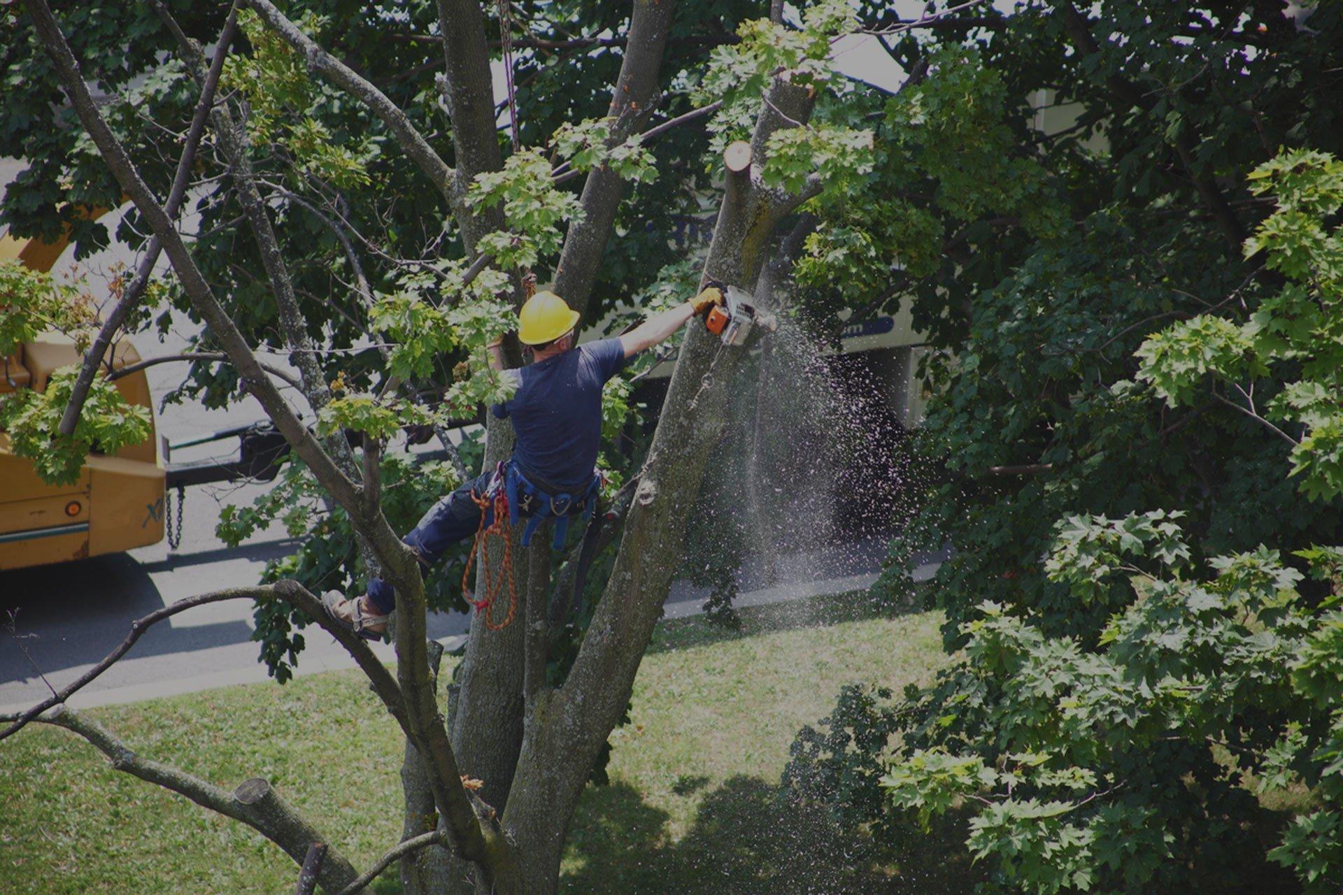Tree Service Westport, CT