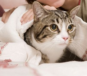 Pet services - Norwich, Norfolk - Cedar House Cattery - Cat care