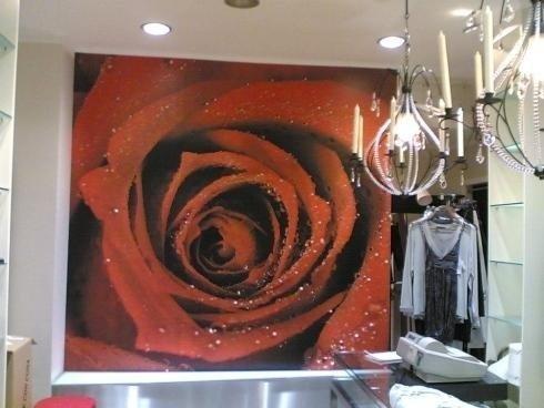 quadro con rappresentata una rosa rossa