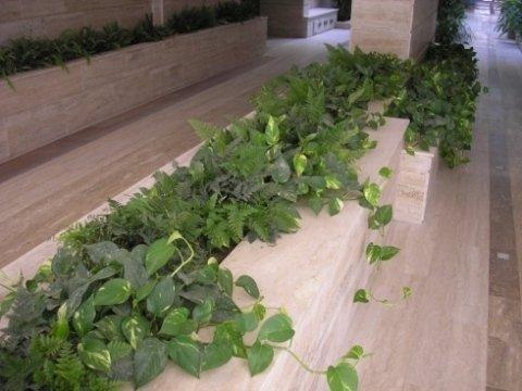 realizzazione di giardini pensili