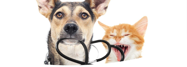 cane e gatto con bocca aperta