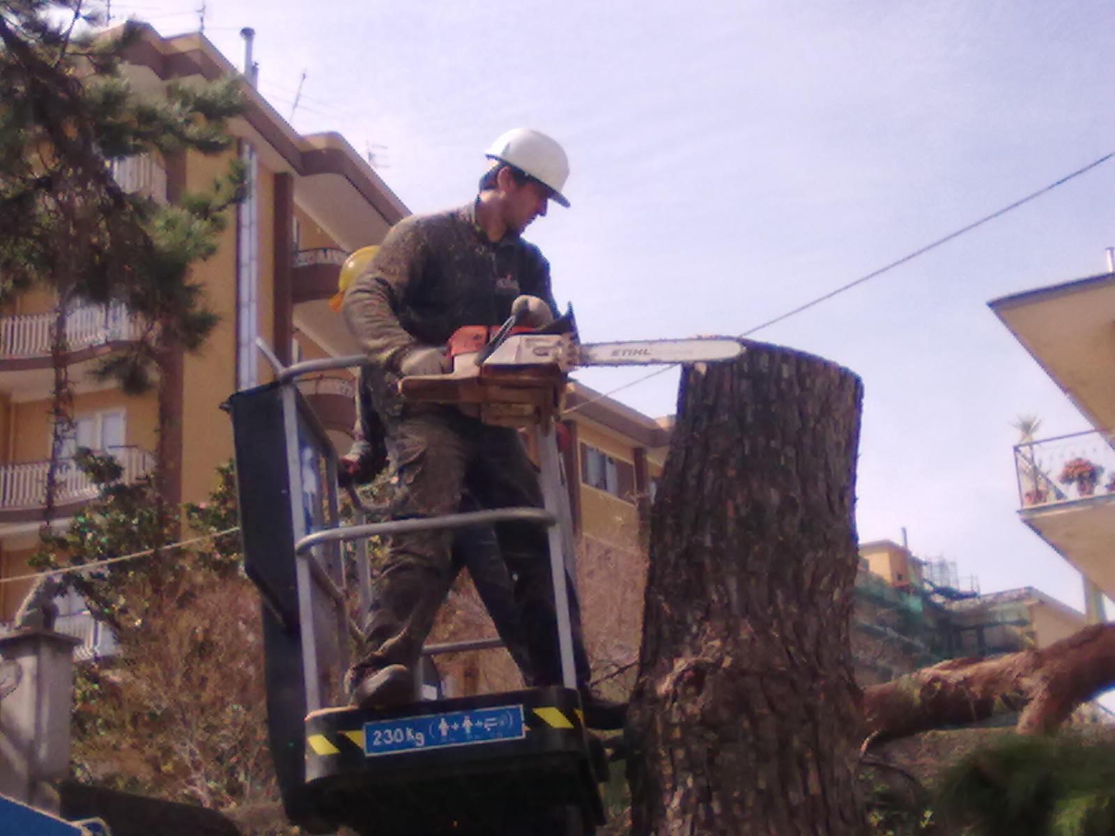 Uomo taglia tronco