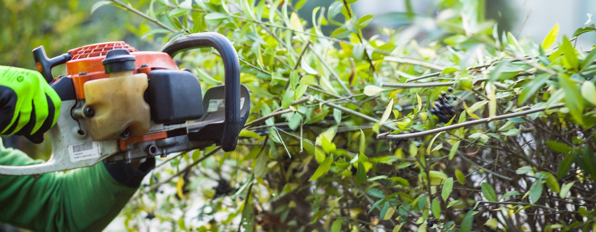 plant cutting