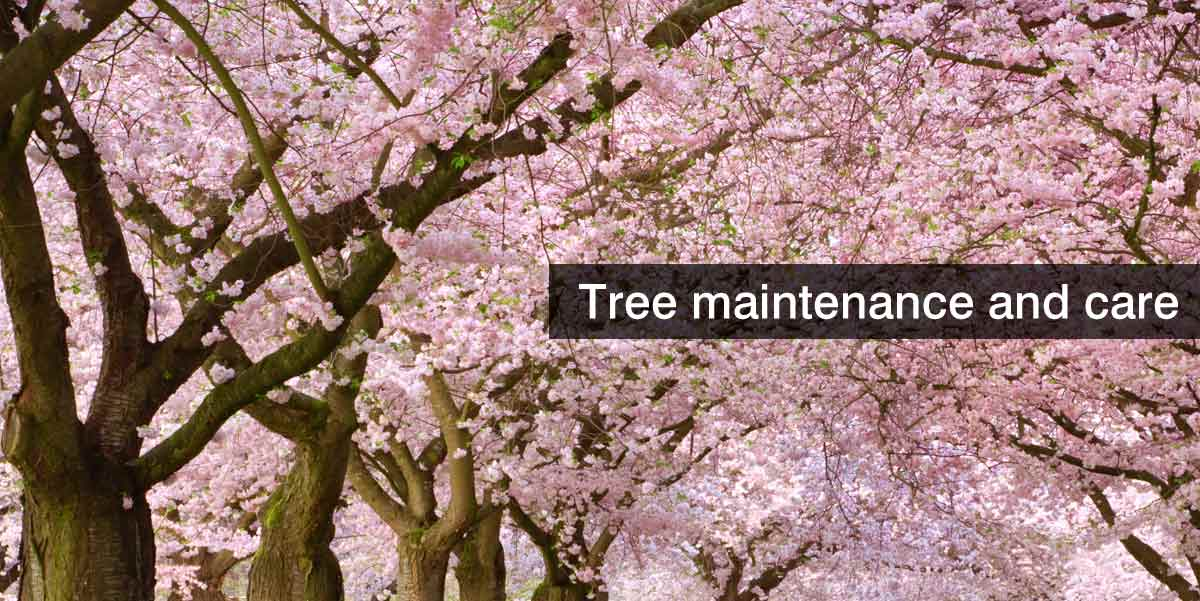 trees-in-blossom