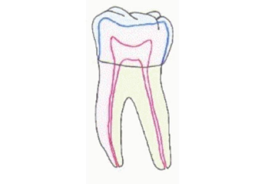 conservazione dentale
