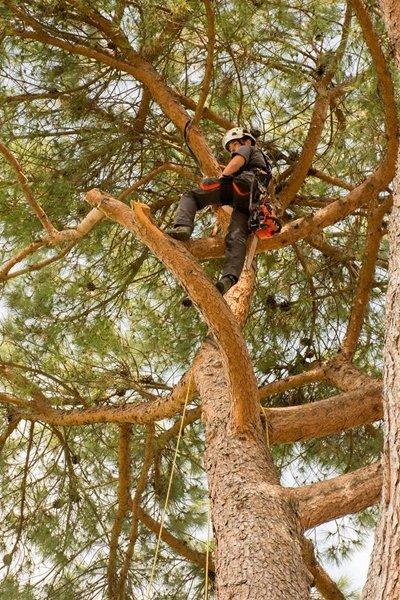 operaio lavora su un albero