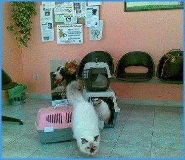 sterilizzazione gatti