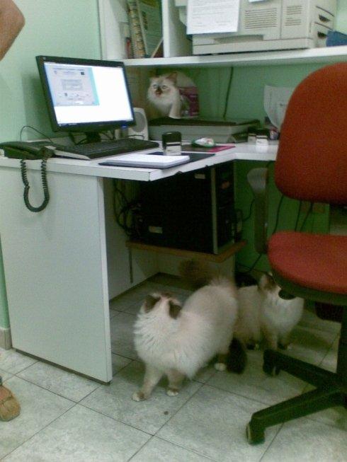 Alcuni piccoli pazienti nella sala visite