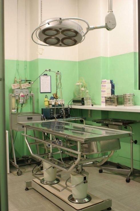 Lo studio veterinario effettua operazioni chirurgiche