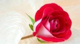 allestimenti floreali, addobbi per matrimoni, fiori