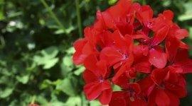 fiori per matrimoni, fiori recisi, alberi