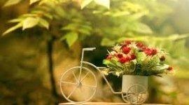 piante sempreverdi, piante ornamentali, piante ornamentali per esterno