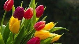 bouquet da sposa, fertilizzanti, fiori di serra