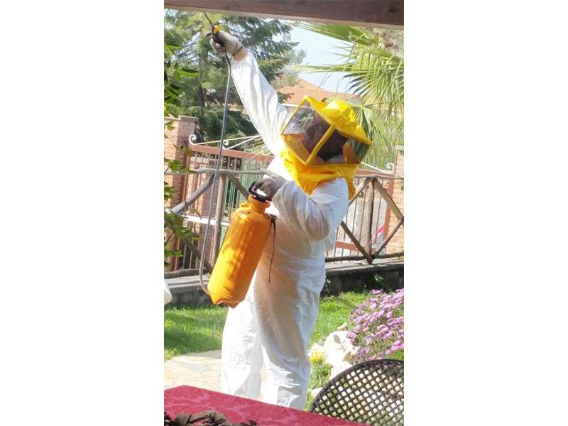disinfestazione di api e vespe
