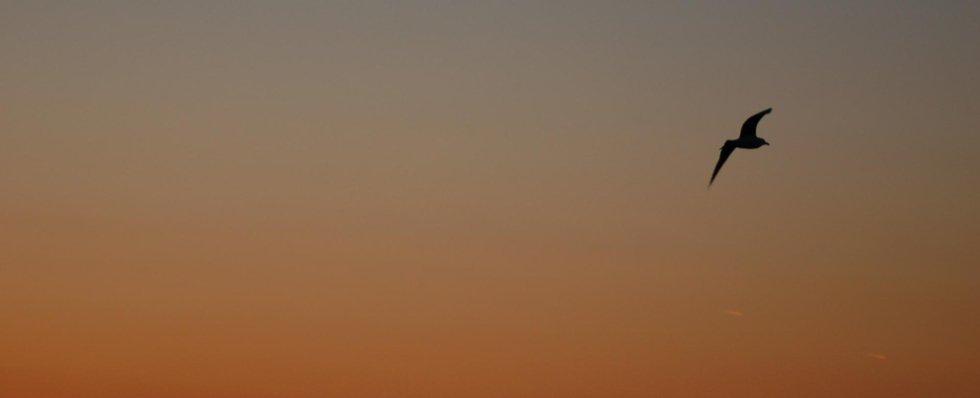 gabbiano tramonto panor