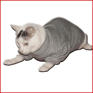 abbigliamento per gatti