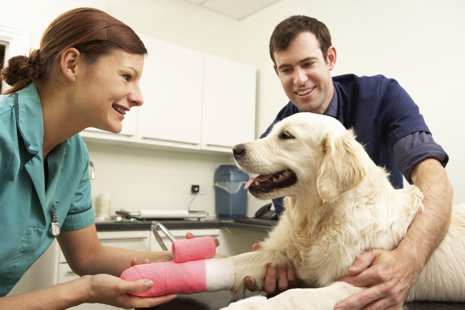 Animal Hospital Pooler, GA