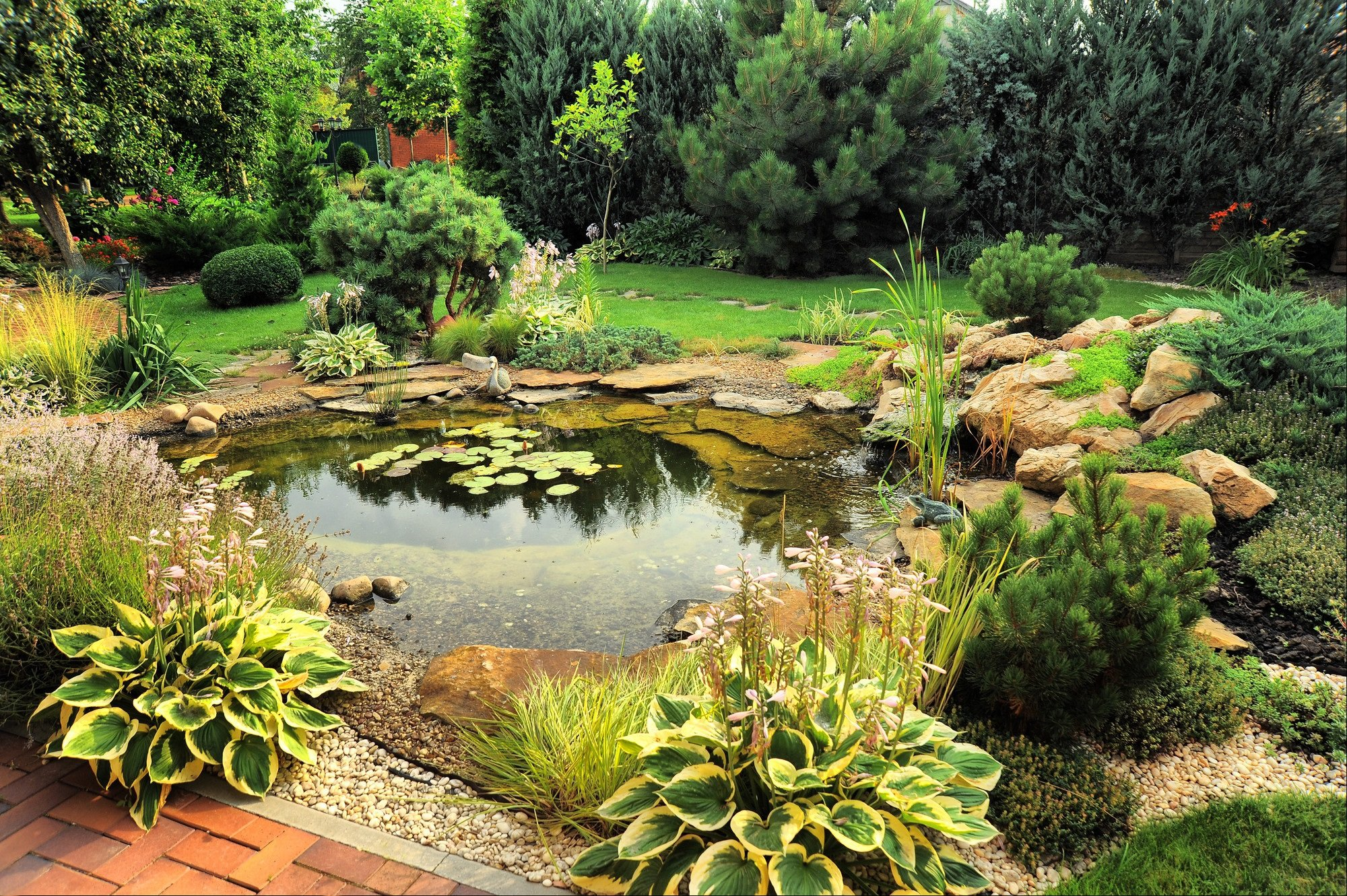 pond with rockery edges and water lilies