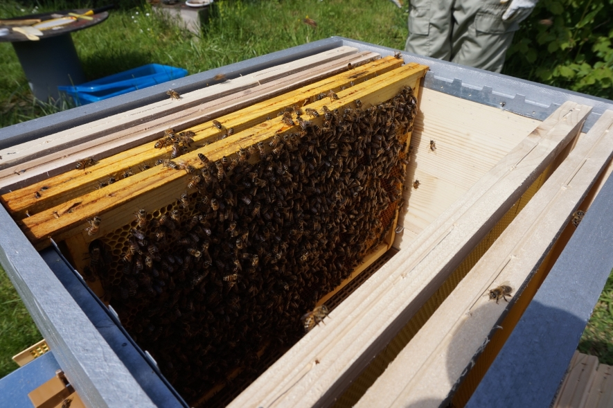 View inside a beehive