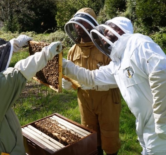 Lifting frames out of a beehive