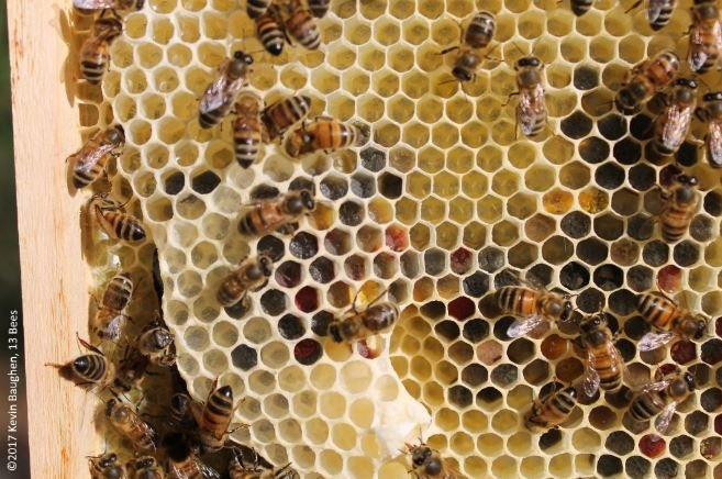 Coloured pollen and new eggs on frames in a beehive